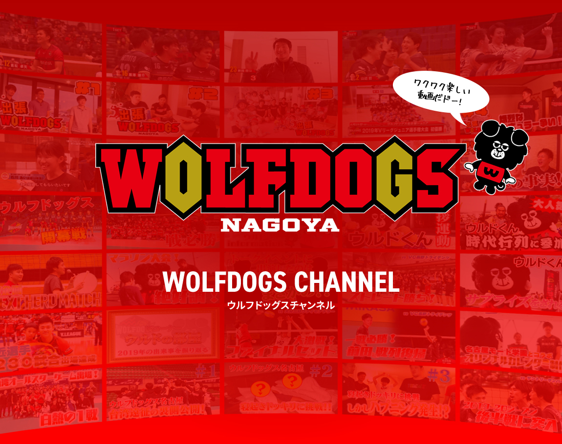 WOLFDOGS CHANNEL